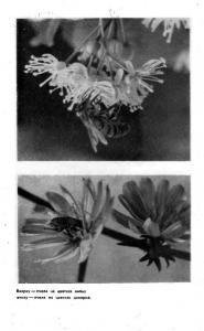 Пчеловодство 1956 №07