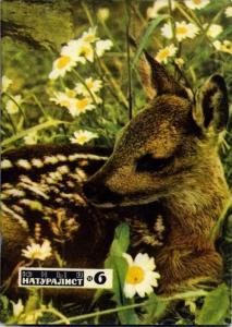 Юный натуралист 1971 №06