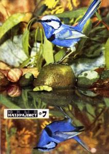 Юный натуралист 1971 №07