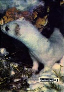 Юный натуралист 1972 №01