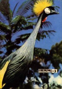 Юный натуралист 1972 №03
