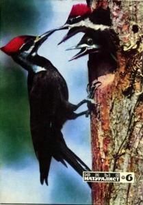 Юный натуралист 1972 №06