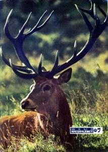 Юный натуралист 1972 №07