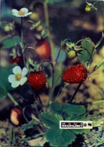 Юный натуралист 1972 №08