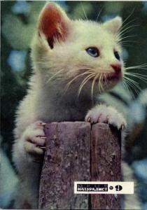 Юный натуралист 1972 №09