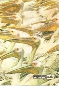 Юный натуралист 1973 №04