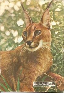 Юный натуралист 1973 №08