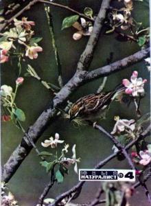 Юный натуралист 1975 №04