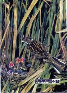 Юный натуралист 1975 №08