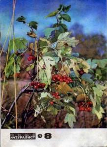 Юный натуралист 1976 №08