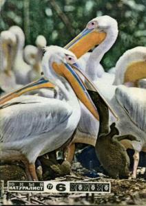 Юный натуралист 1977 №06