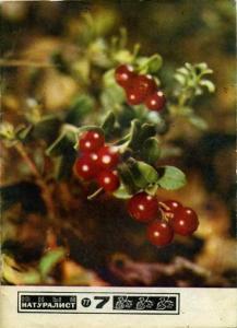 Юный натуралист 1977 №07