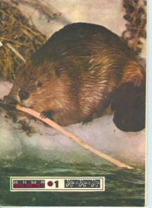 Юный натуралист 1978 №01