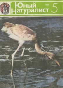Юный натуралист 1981 №05